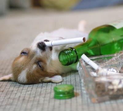 담배는 죽어도 안핀다. 술도 정말 별 생각없다.